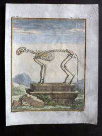 Buffon First Edition C1770 Antique Hand Col Print. Skeleton of Cougar 9-20